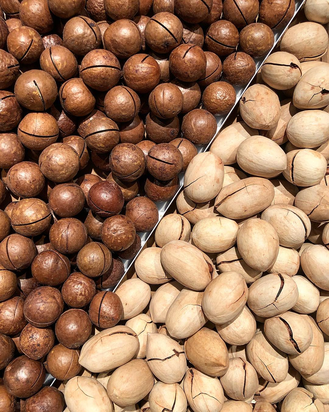 Разновидности ореха в картинках
