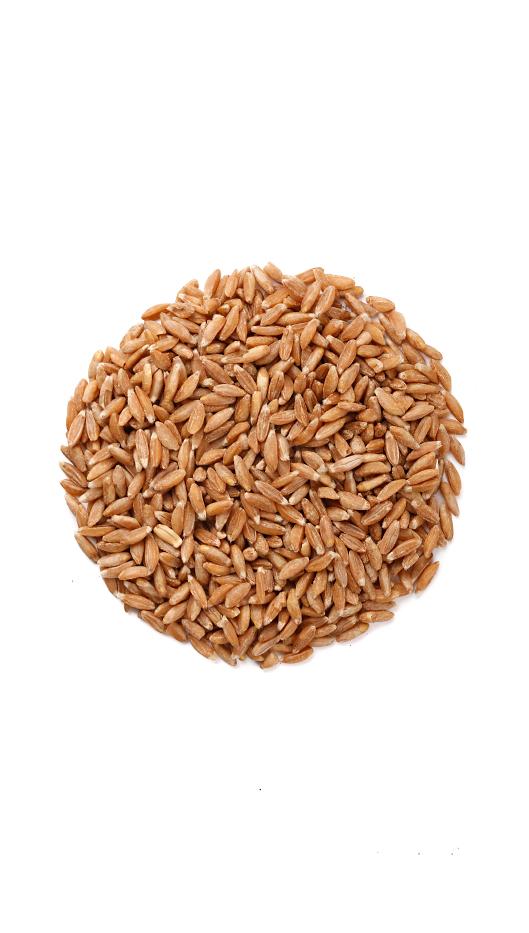 Многие тысячелетия насчитывает история употребление человеком зерен и бобов. Всем известные зерновые – это пшеница, гречка, полба, кукуруза,