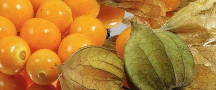 как использовать плоды физалиса