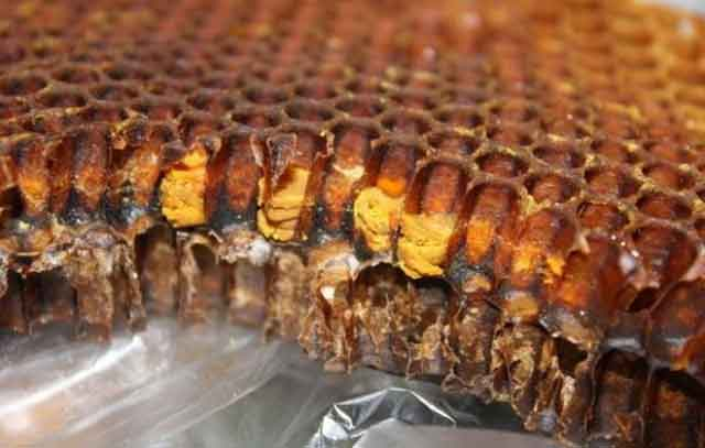 как выглядит пчелиная перга